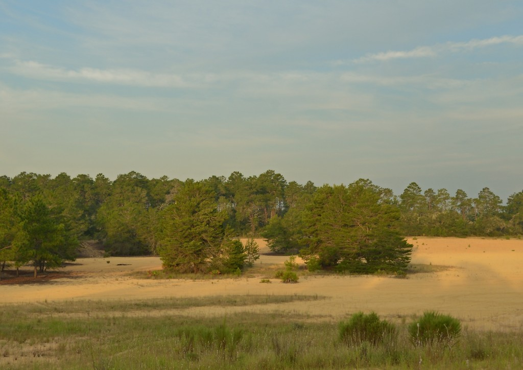 """Dubbed """"Sand Land"""" by some creative soul on Panoramio, this scrub barren on FR 11 just south of Ocklawaha Lake is the result of off-road vehicle abuse of the scrub habitat.  Even though vehicular use of this tract is no longer permitted, it remains in this degraded state."""