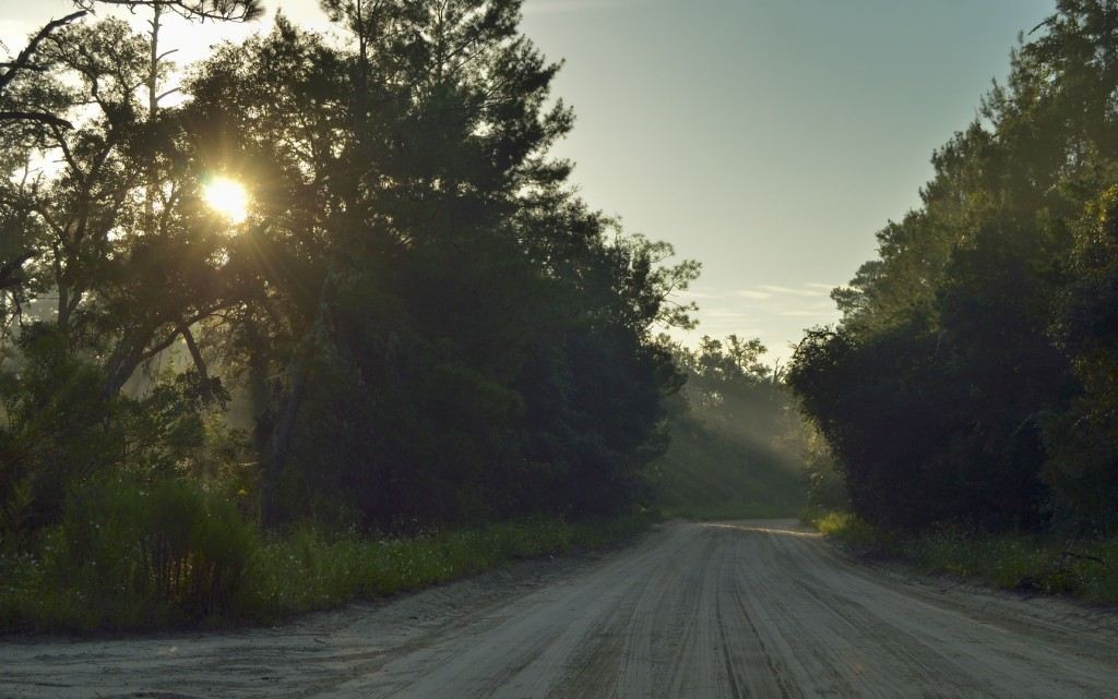 Paisey Road, Ocala National Forest