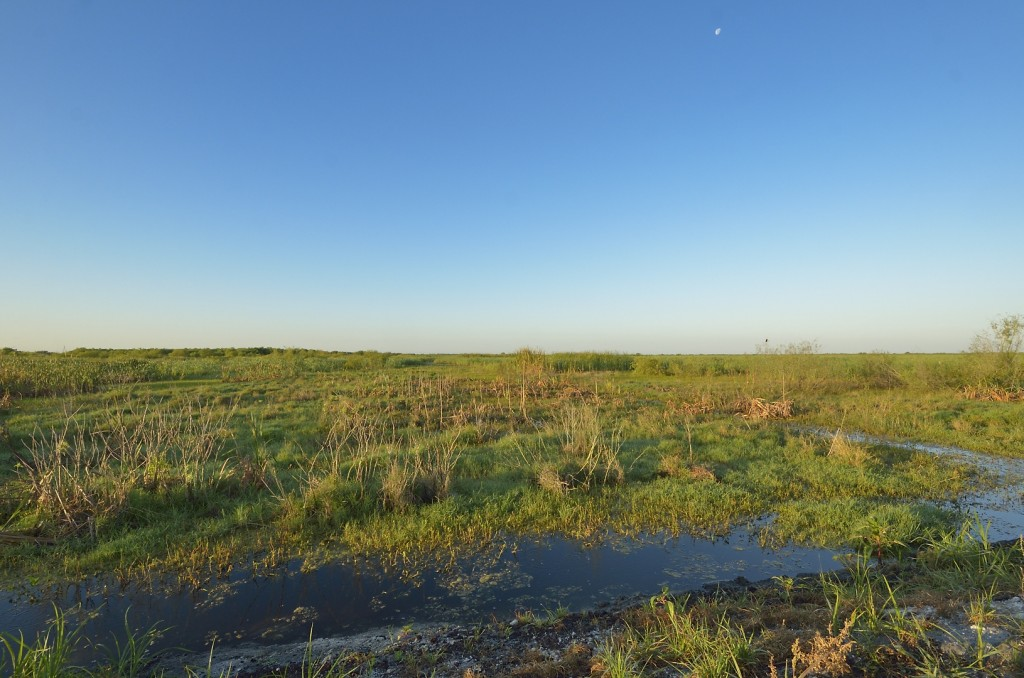 Most of the habitat in the Lake Apopka Restoration Area is highly disturbed, consisting of former agricultural fields that are converting back to a variety of  marsh habitats.