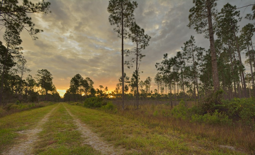 The glorious sunrise in the flatwoods cheered me up for a few minutes, but the release from psychic pain was ephemeral.